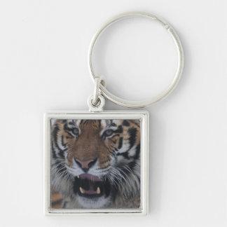 Siberian Tiger Yawning Keychain