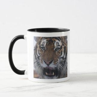 Siberian Tiger Yawning Mug