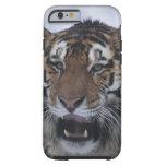 Siberian Tiger Yawning Tough iPhone 6 Case