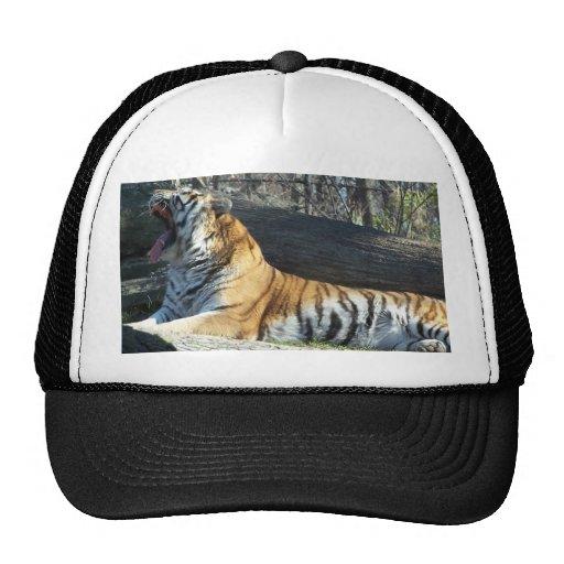 Siberian Tiger Yawning Trucker Hat
