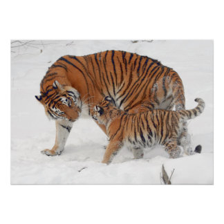 Siberian tigers (Female and Puppy) Poster