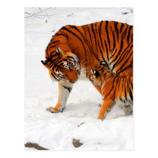 siberian tigers mom  love postcard