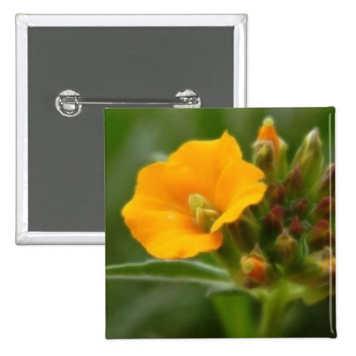Siberian Wallflower Buds And Flower 2 Inch Square Button