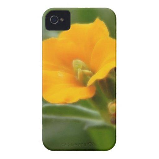 Siberian Wallflower Buds And Flower Blackberry Bold Cases