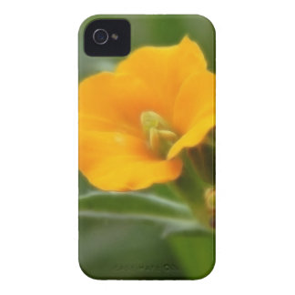 Siberian Wallflower Buds And Flower iPhone 4 Cases