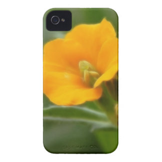 Siberian Wallflower Buds And Flower iPhone 4 Cover