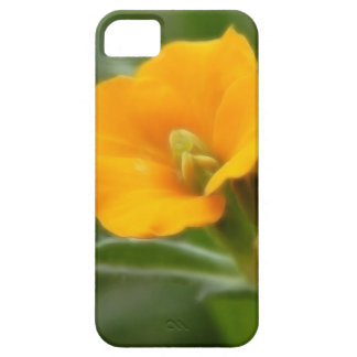 Siberian Wallflower Buds And Flower iPhone SE/5/5s Case