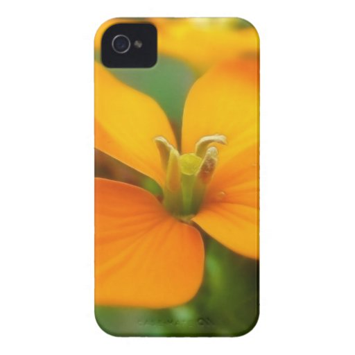 Siberian Wallflower - Cheiranthus allionii iPhone 4 Case