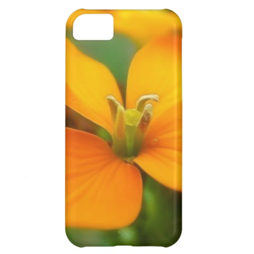 Siberian Wallflower - Cheiranthus allionii iPhone 5C Cases