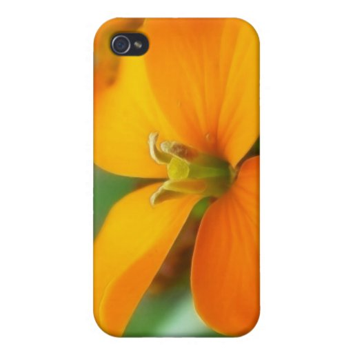 Siberian Wallflower - Cheiranthus allionii iPhone 4 Covers