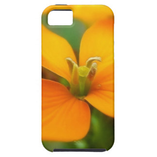 Siberian Wallflower - Cheiranthus allionii iPhone SE/5/5s Case