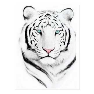 Siberian White Tiger Postcard