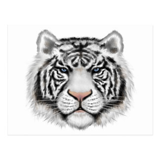Siberian White Tiger Postcards