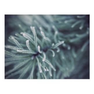 Siberian Winter 3 Postcard