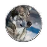 Siberiano Huskey