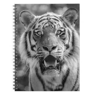 Sibirian Tiger Notebook