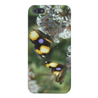 Sibling butterflies iPhone SE/5/5s cover
