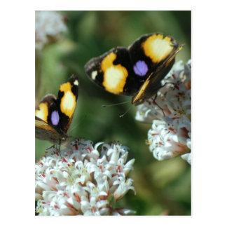 Sibling butterflies postcard