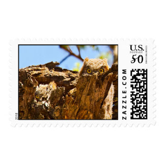 Sibling Great Horned Owls Postage