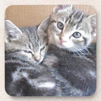 Sibling Kitties Coaster