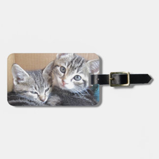 Sibling Kitties Tag For Luggage