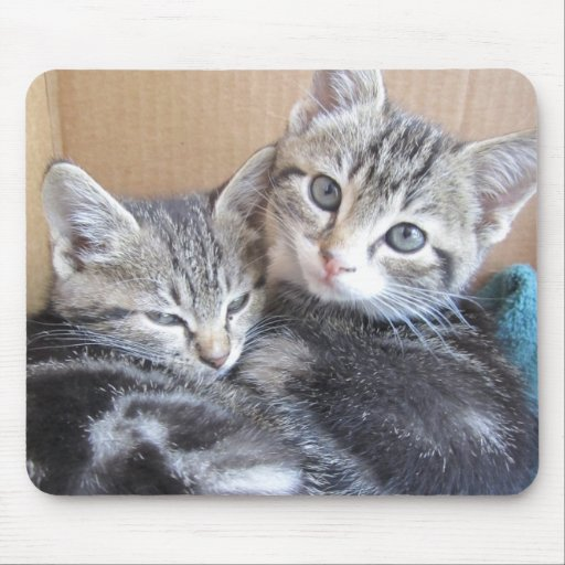 Sibling Kitties Mouse Pad