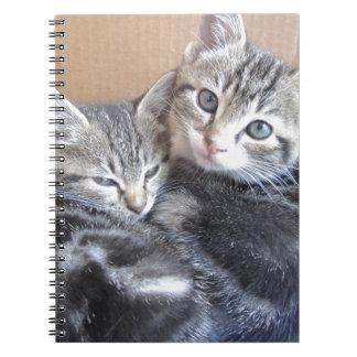 Sibling Kitties Notebook