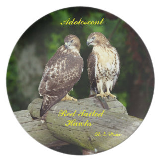 Siblings/ Adolescent Red Tailed Hawks/ R.E. Weiss Melamine Plate