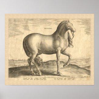 Sicilian Horse Antique Renaissance Print