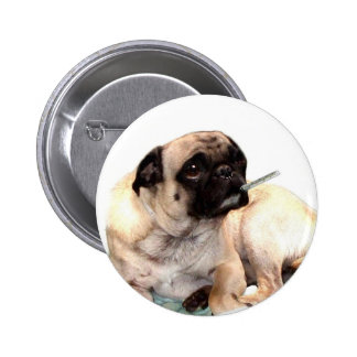 Sick pug with thermometer button