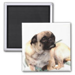 Sick pug with thermometer magnet square