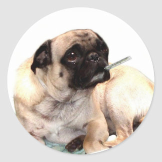 Sick pug with thermometer sticker