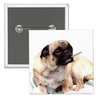 Sick pug with thermometer veterinarian button