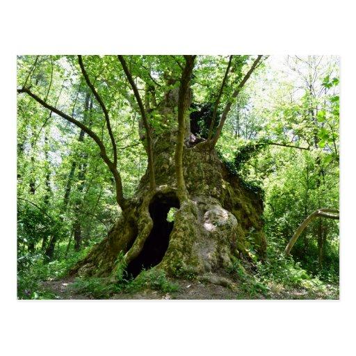 Sicómoro de la casa en el árbol postales