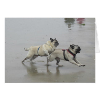 Sid Precious and Hemi at Dog Beach, San Diego Greeting Card