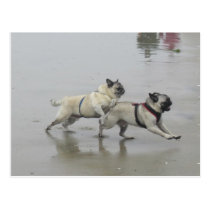 Sid Precious and Hemi at Dog Beach, San Diego Postcard