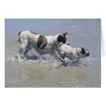 Sid the Pug at Dog Beach, San Diego, CA