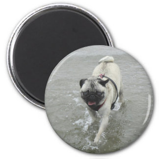 Sid the Puggy at the Beach Fridge Magnet