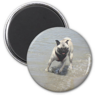 Sid the Puggy at the Beach Fridge Magnets
