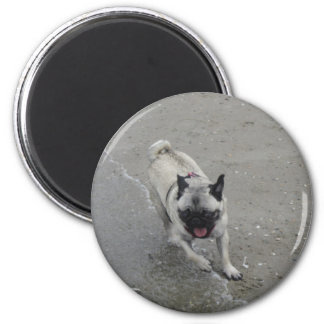 Sid the Puggy at the Beach Refrigerator Magnets