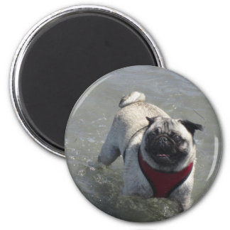 Sid the Pug's Beach Photo - Sid the Puggy Rocket Refrigerator Magnets