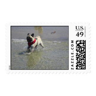 Sid the Pug's Beach Photo - Sid the Puggy Rocket Postage Stamp