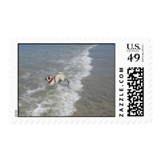 Sid the Pug's Beach Photo - Sid the Puggy Rocket Postage