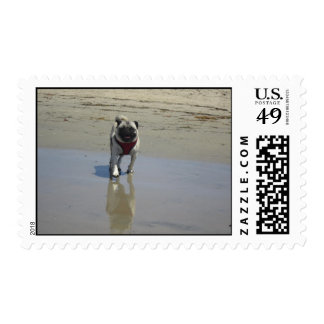 Sid the Pug's Beach Photo - Sid the Puggy Rocket Stamps