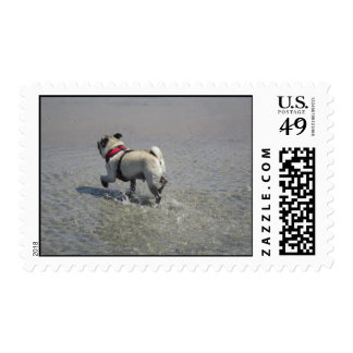 Sid the Pug's Beach Photo - Sid the Puggy Rocket Postage Stamps