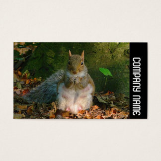 Side Band - Grey Squirrel Business Card