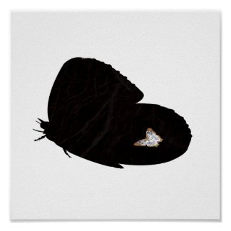 Side butterfly shape with moth pic poster