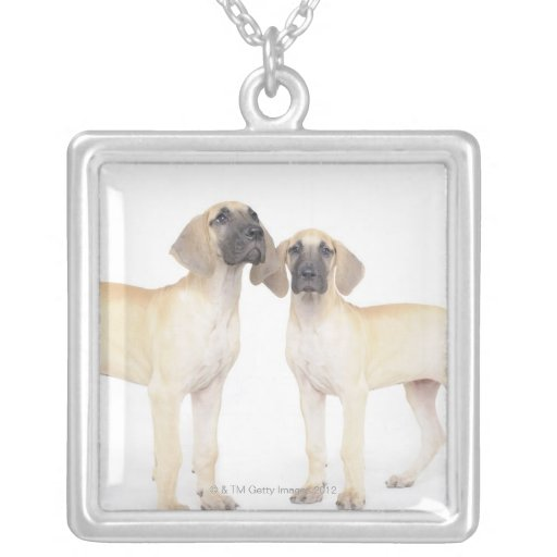side by side,small group of animals,togetherness necklace
