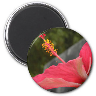 Side Of A Pink Hibiscus 2 Inch Round Magnet