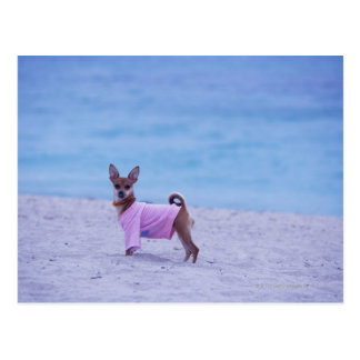 Side profile of a dog standing on the beach, postcard
